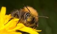 说说唱唱的手指谣I caught a little bumble bee
