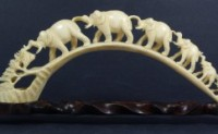 读报:Japan's refusal to stop ivory trade undermines bans elsewhere