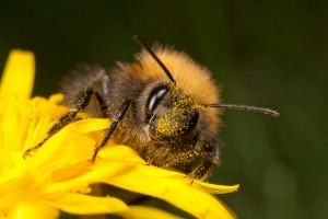 Tree-Bumble-Bee